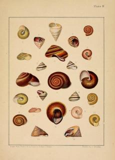 species checklist; catalogue; endangered species; endangered animals; 2000; iucn red list; checklist; monocot;monograph;mollusc