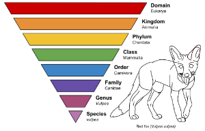 binomial nomenclature, examples of biodiversity, Vulpes vulpes
