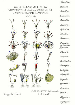 Linnaean classification in 1736, biodiversity animals