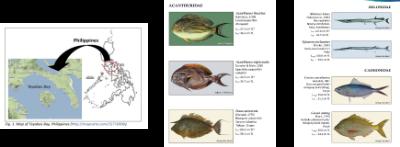 Fishes of Tayabas Bay, Tayabas resource management, value of biodiversity, ecosystem biodiversity
