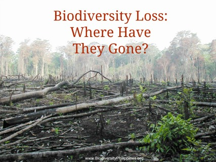 Is the Future of Biodiversity All About Biodiversity Loss? -