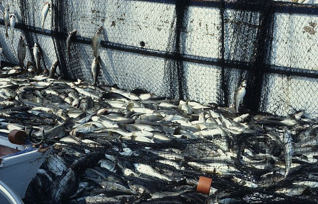 overfishing,biodiversity loss fish