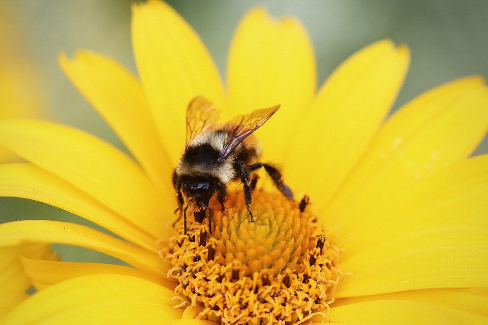 where are the bees, bees decline, bees disappearing