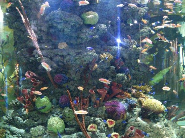 ecosystem function, marine habitat, marine ecosystem, coastal ecosystem