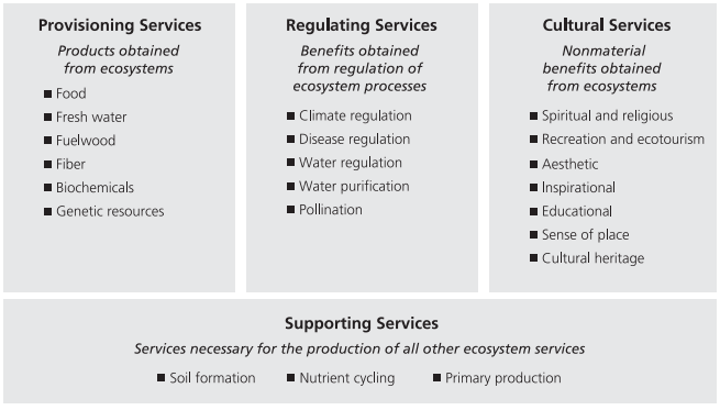 ecosystem, services