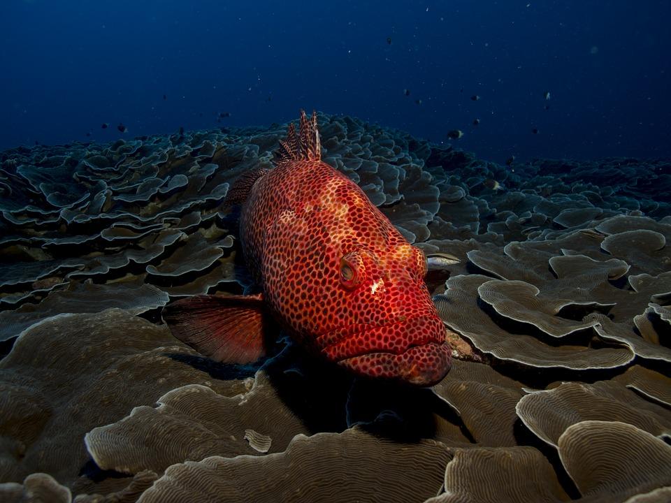 grouper, biodiversity, measure, index, philippines