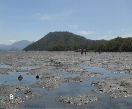 molluscs, Padada, bivalves, gastropods, intertidal, Davao del Sur